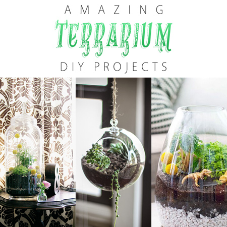 Amazing Terrarium DIY Projects - The Cottage Market