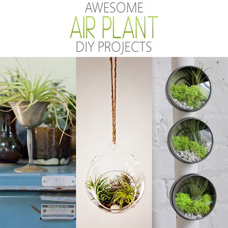 Awesome Air Plant DIY Projects
