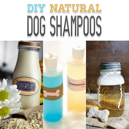 DIY Natural Dog Shampoos