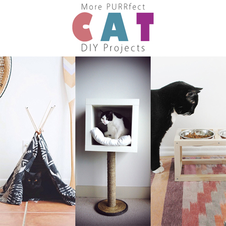 More PURRfect Cat DIY Projects
