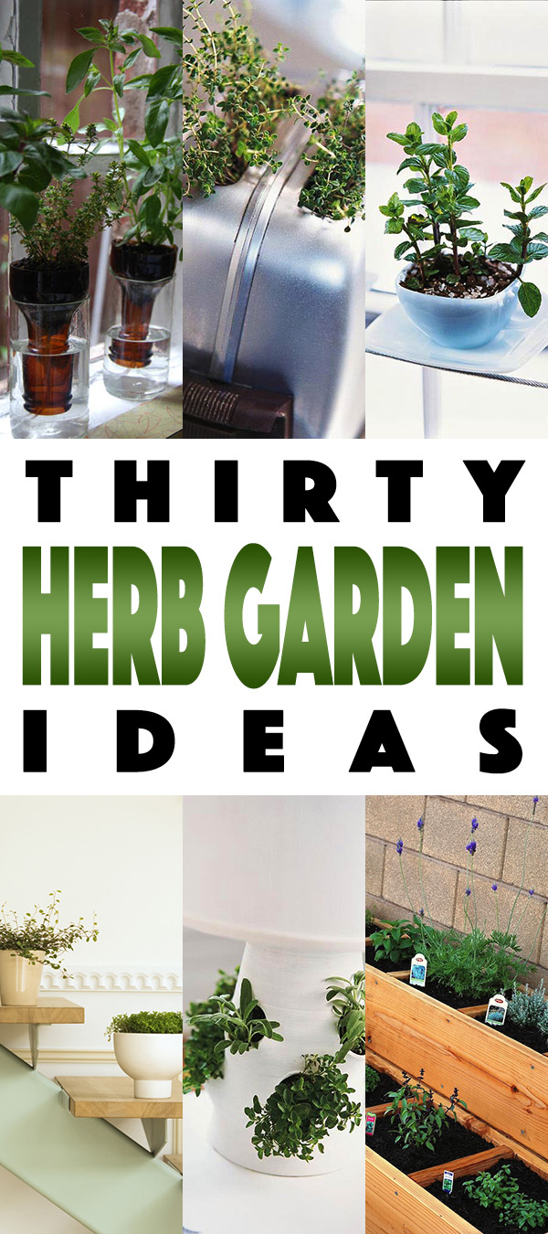 GARDENTOWER1 Herb Gardens 30 great Herb