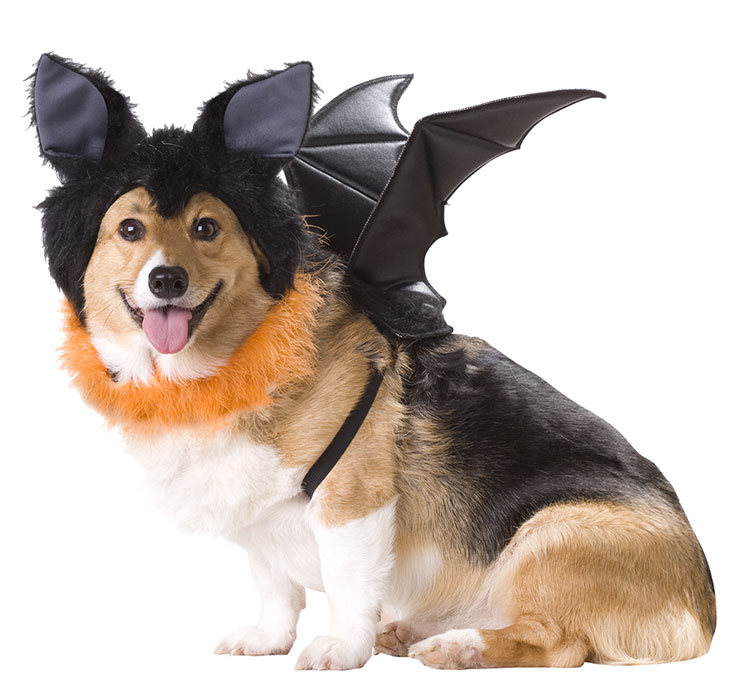 Large Dog Shark Costume Pet20103-bat-dog-costume-large