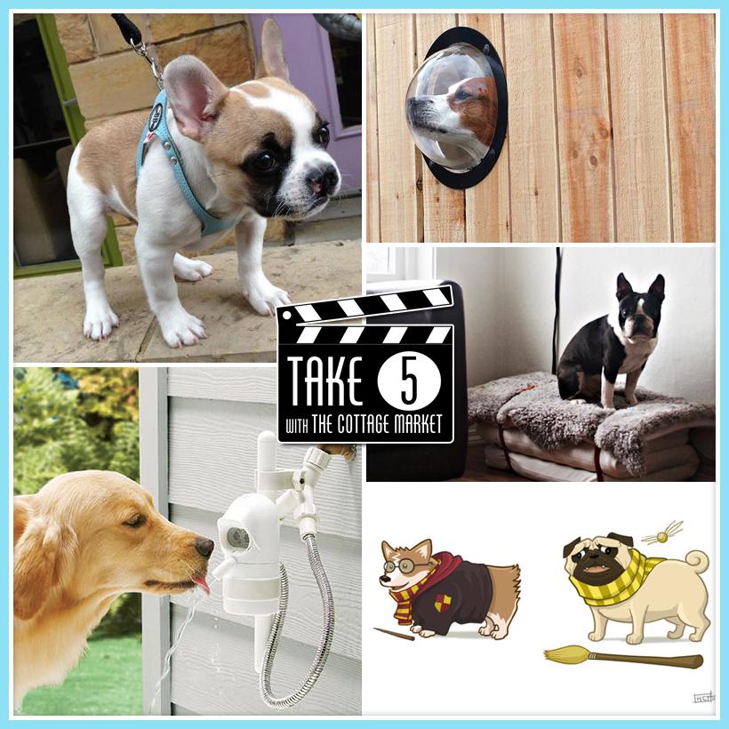 Take Five Cool Dog Stuff The Cottage Market