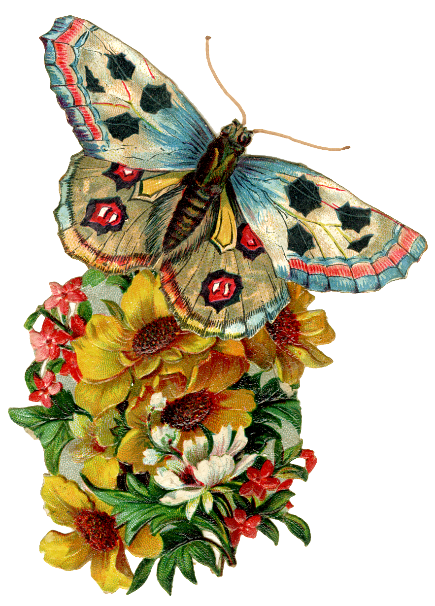 Graphic of the day Vintage Butterfly - The Cottage Market