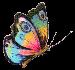 butterfly-2-300x281