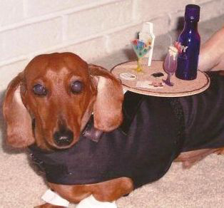 Pet halloween costumes handmade diys and more the cottage market cocktail weiner dog costume solutioingenieria Choice Image