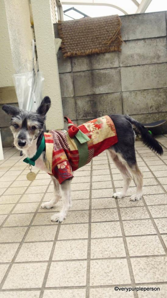 dogcoat23