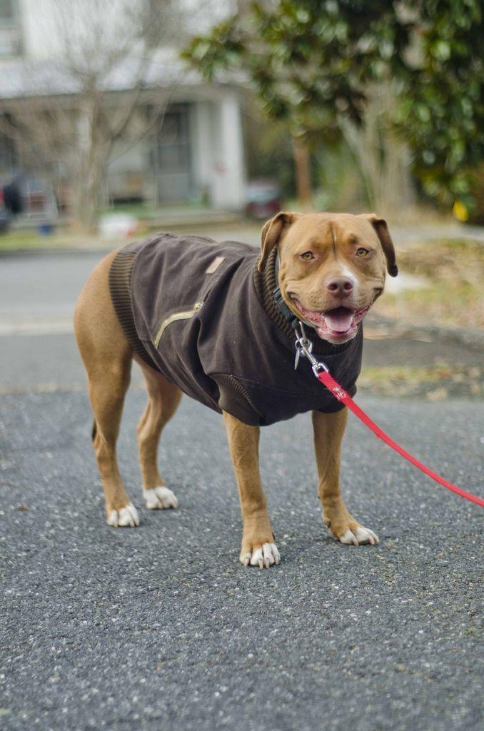 dogcoat4