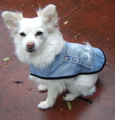 dogcoat7