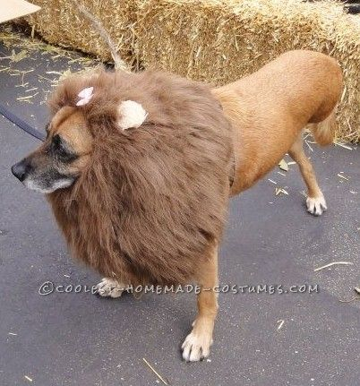 Pet halloween costumes handmade diys and more the cottage market the diy is on coolest homemade costumes petcostume8 solutioingenieria Gallery