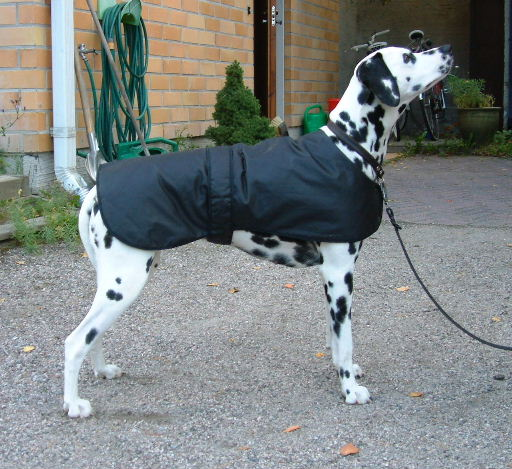 Large Dog Coat Patterns Gallery