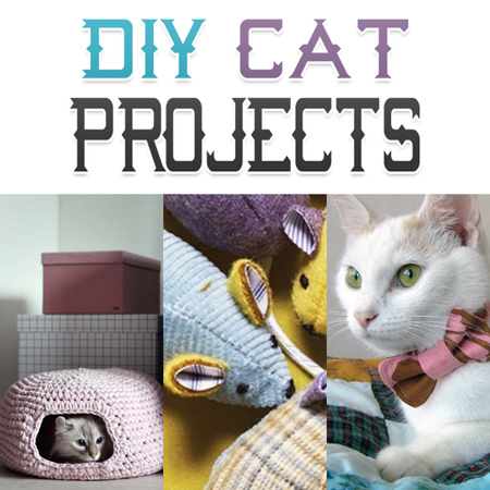 Diy Cat Toy With Treats