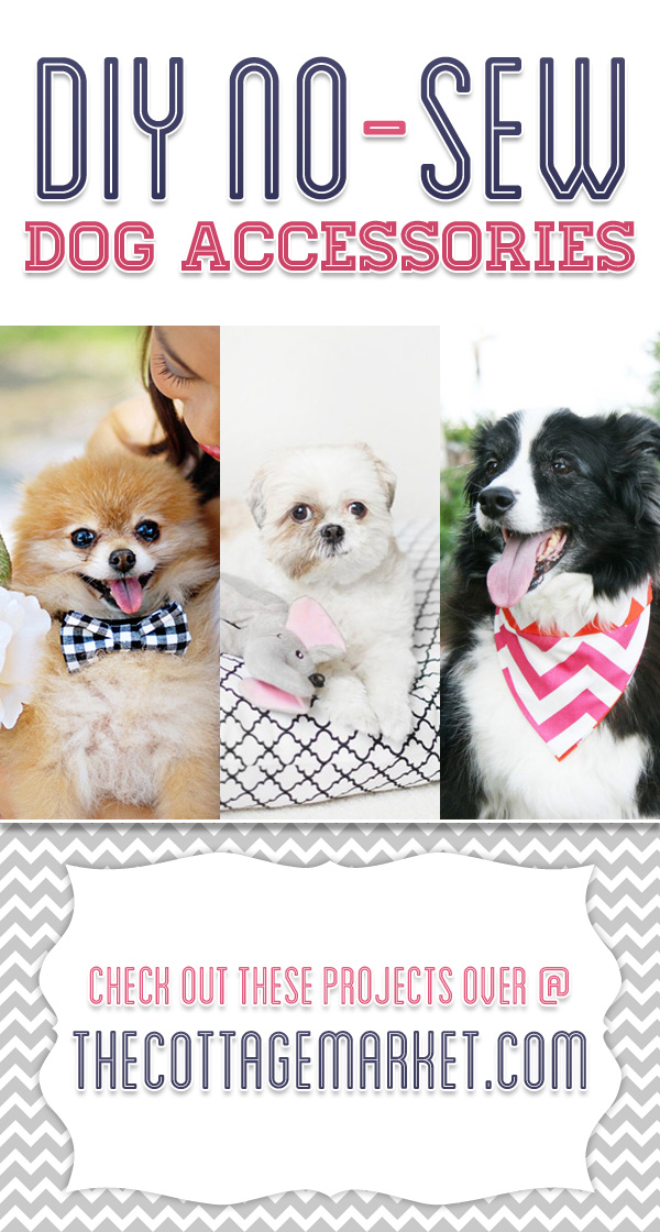 These no-sew dog accessories are fun and easy to make.