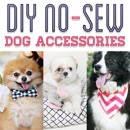 DIY No Sew Dog Accessories