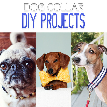 Dog Collar DIY Projects