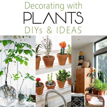 Plant Shelf Kitchen