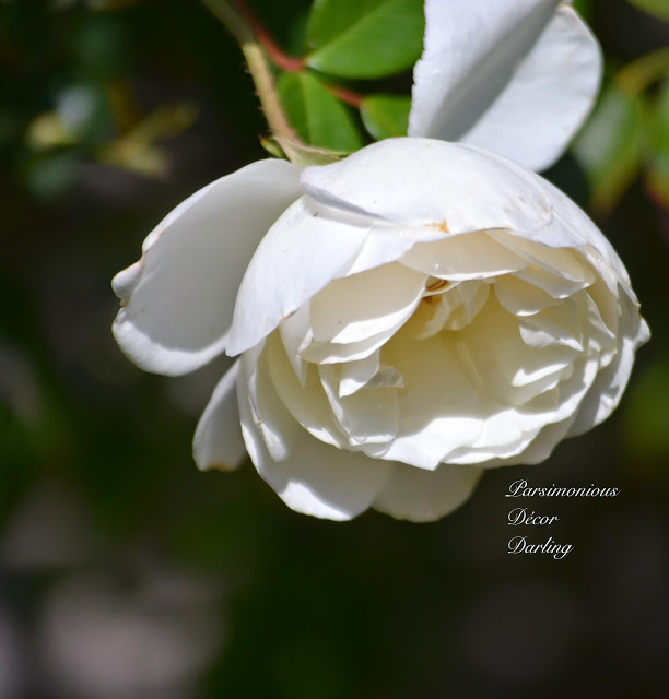 blogger-image--519306009