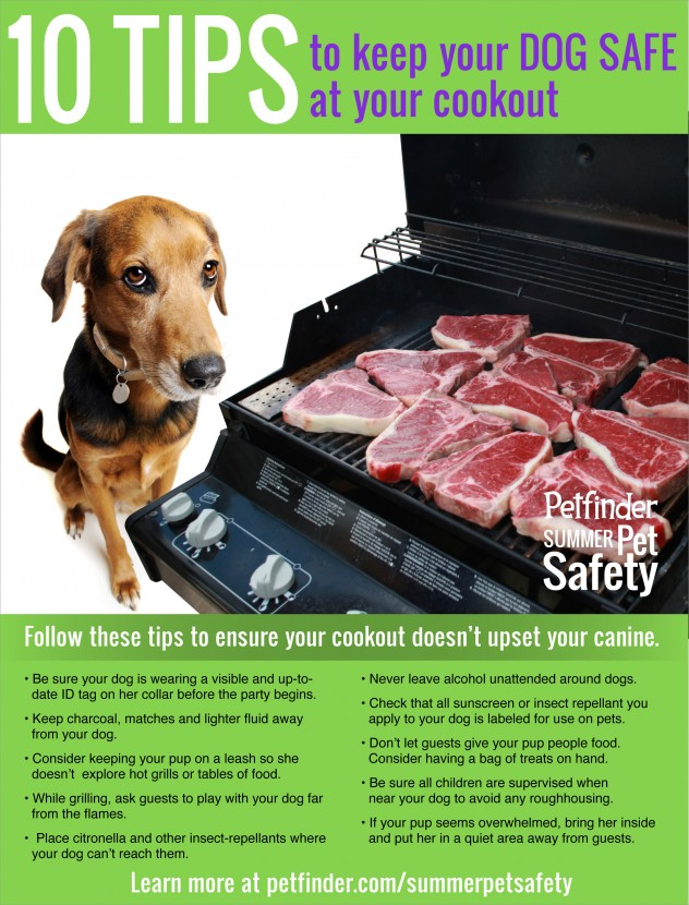 10-tips-keep-your-dog-safe-at-cookout-632x830