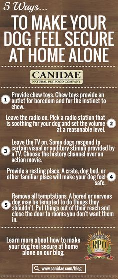 Pet Safety Infographic - how to make your dog feel safe home alone