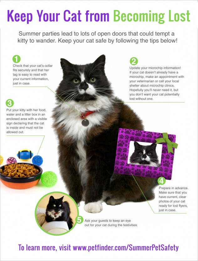 5-tips-to-keep-cat-from-becoming-lost-632x832