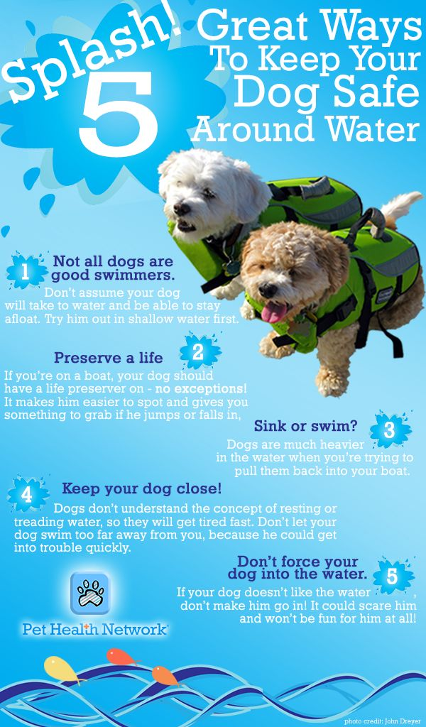 Pet Safety Infographic - ways to keep your dog safe around water