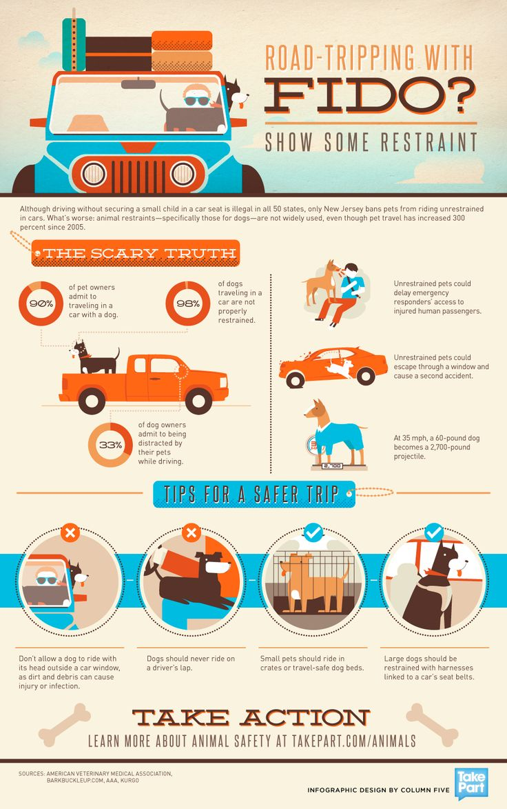 Pet Safety Infographic - road trip safety tips for dogs