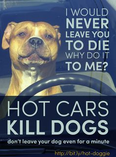 Hot Cars Kill Dogs - Awareness Poster