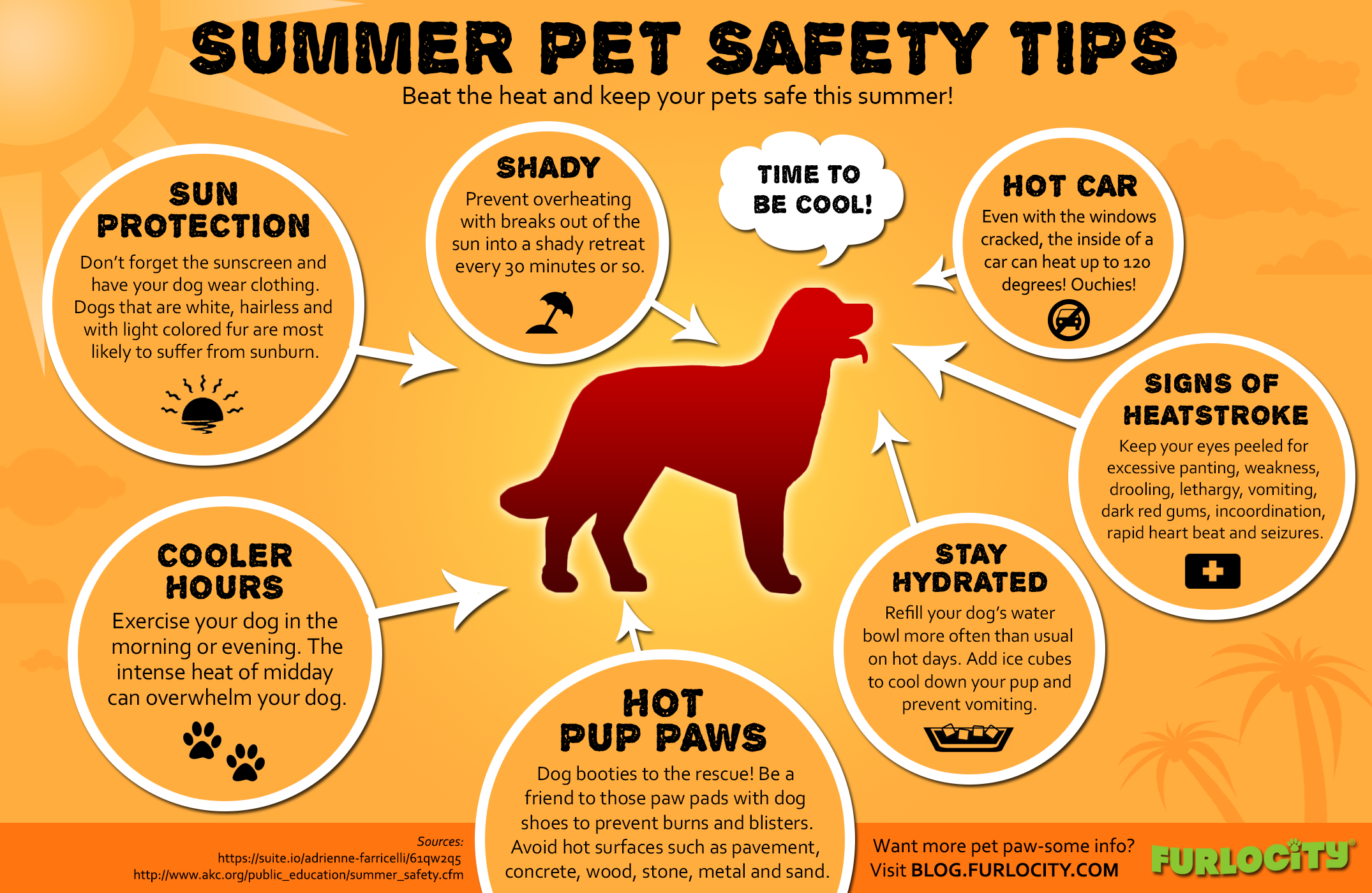 summer-pet-safety-tips_539a4cd4cb7e8