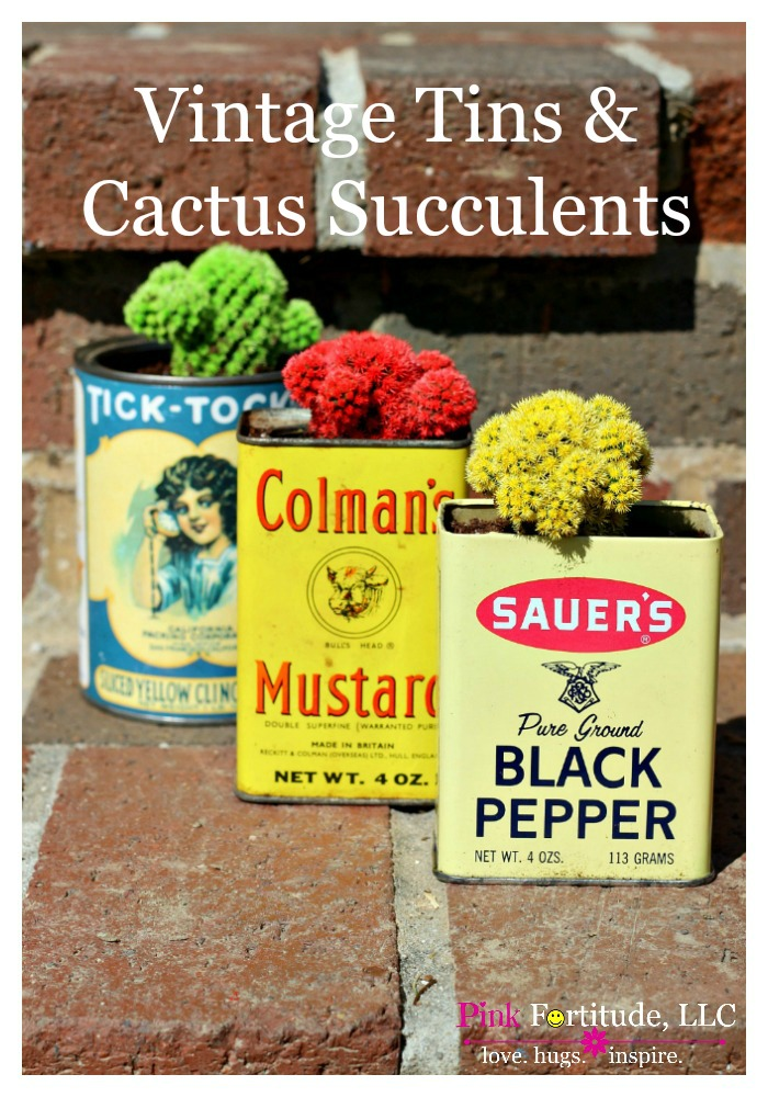 Vintage-Tins-and-Cactus-Succulents