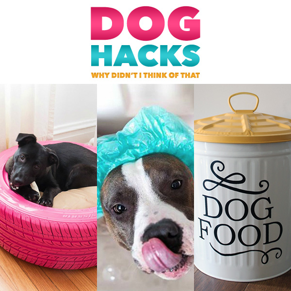 Dog Hacks Why Didn't I Think Of That