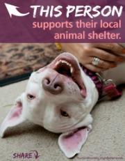 2012_shelter