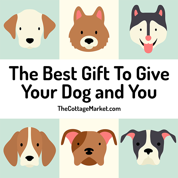 The Best Gift To Give Your Dog and You