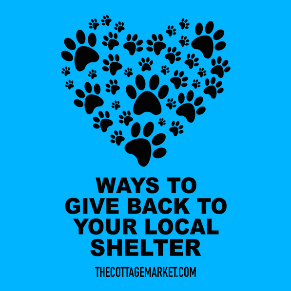 Ways to Giveback to your Local Shelter