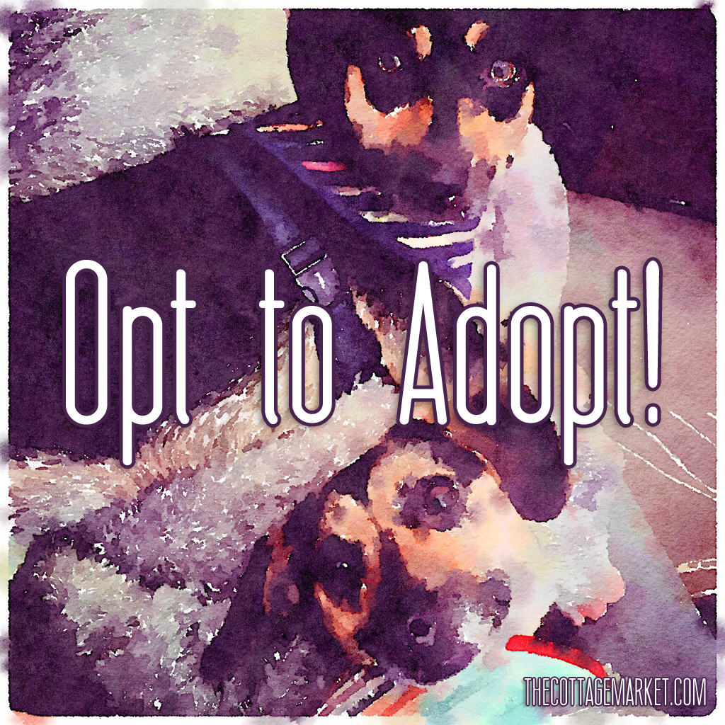 TheCottageMarket-OpttoAdopt-Quote-1