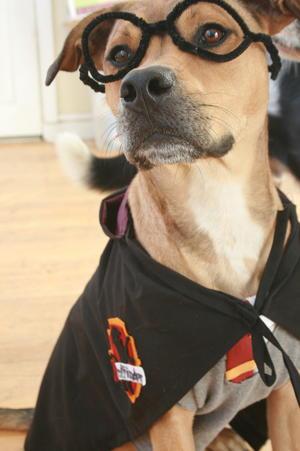 DogCostume7