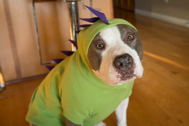 Doggie17