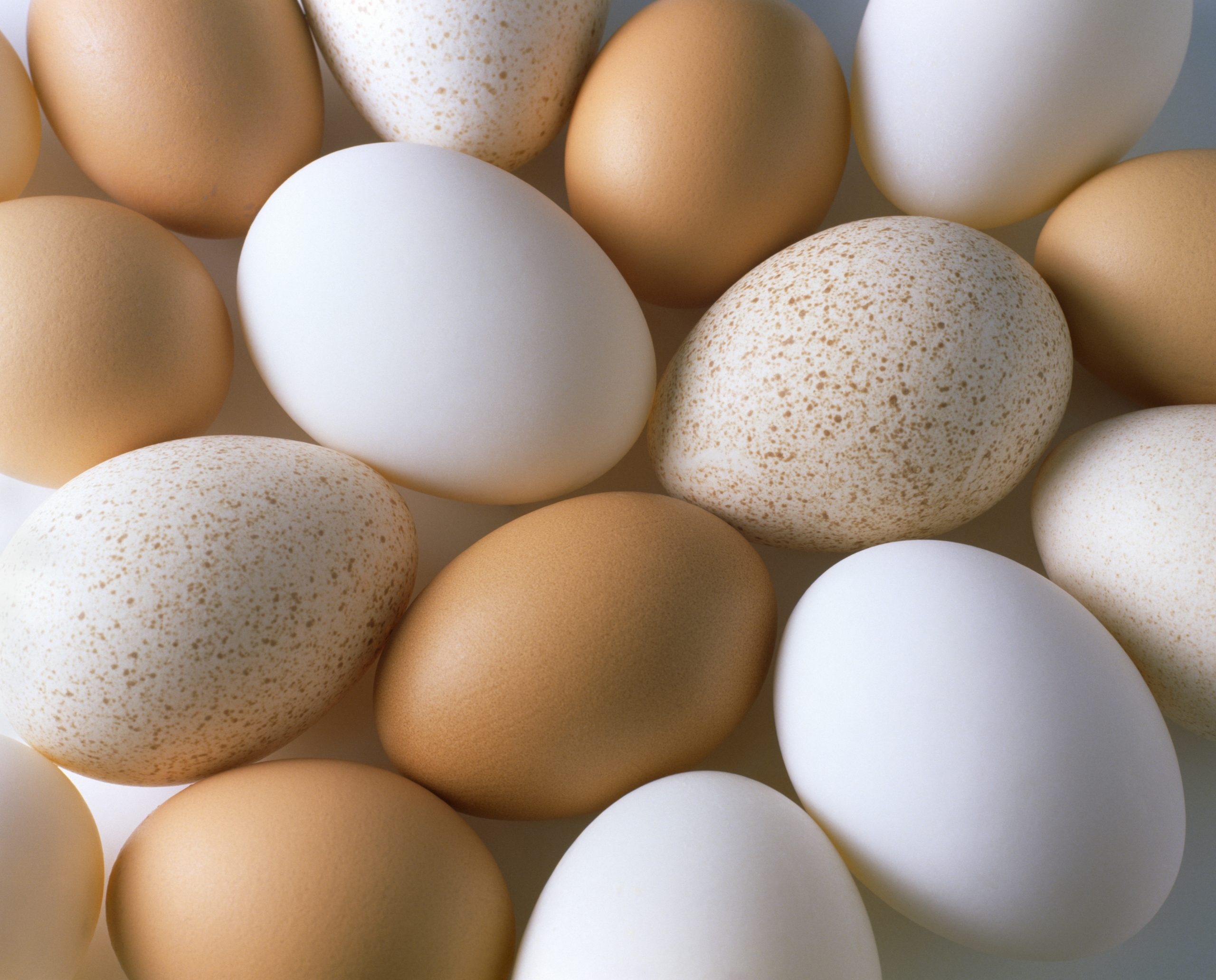 Selection of goose, duck and chicken eggs