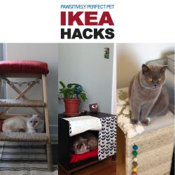 Pawsitively Perfect Pet IKEA Hacks