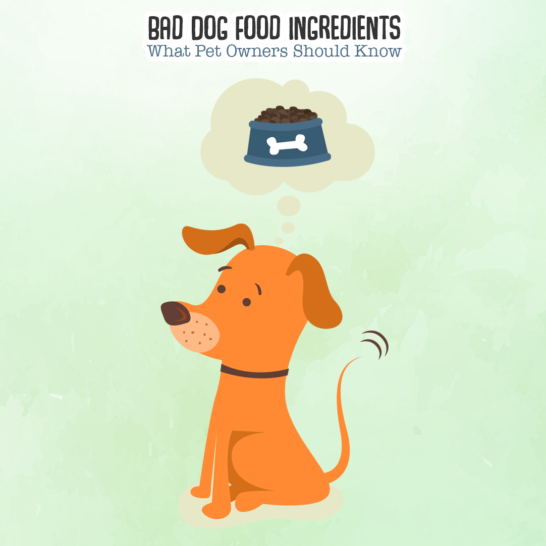 Bad Dog Food Ingredients What Pet Owners Should Know