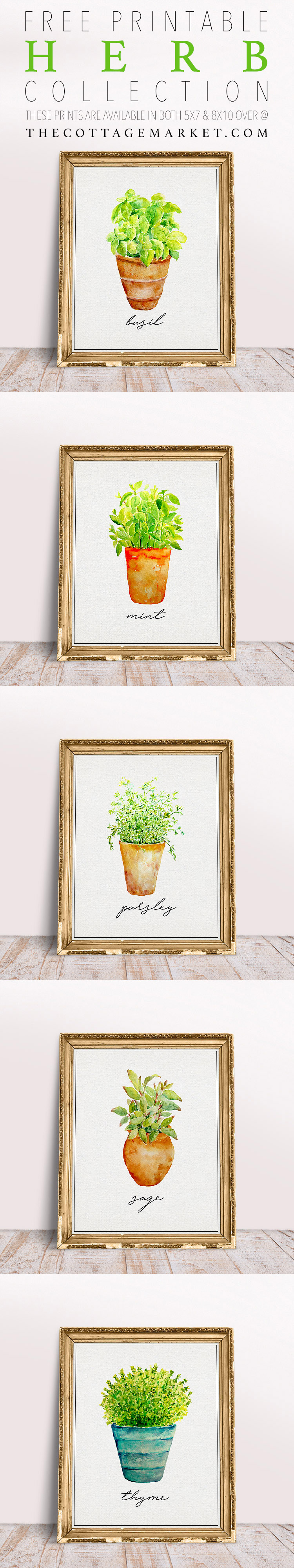 This collection of herb inspired printables are simple and elegant.