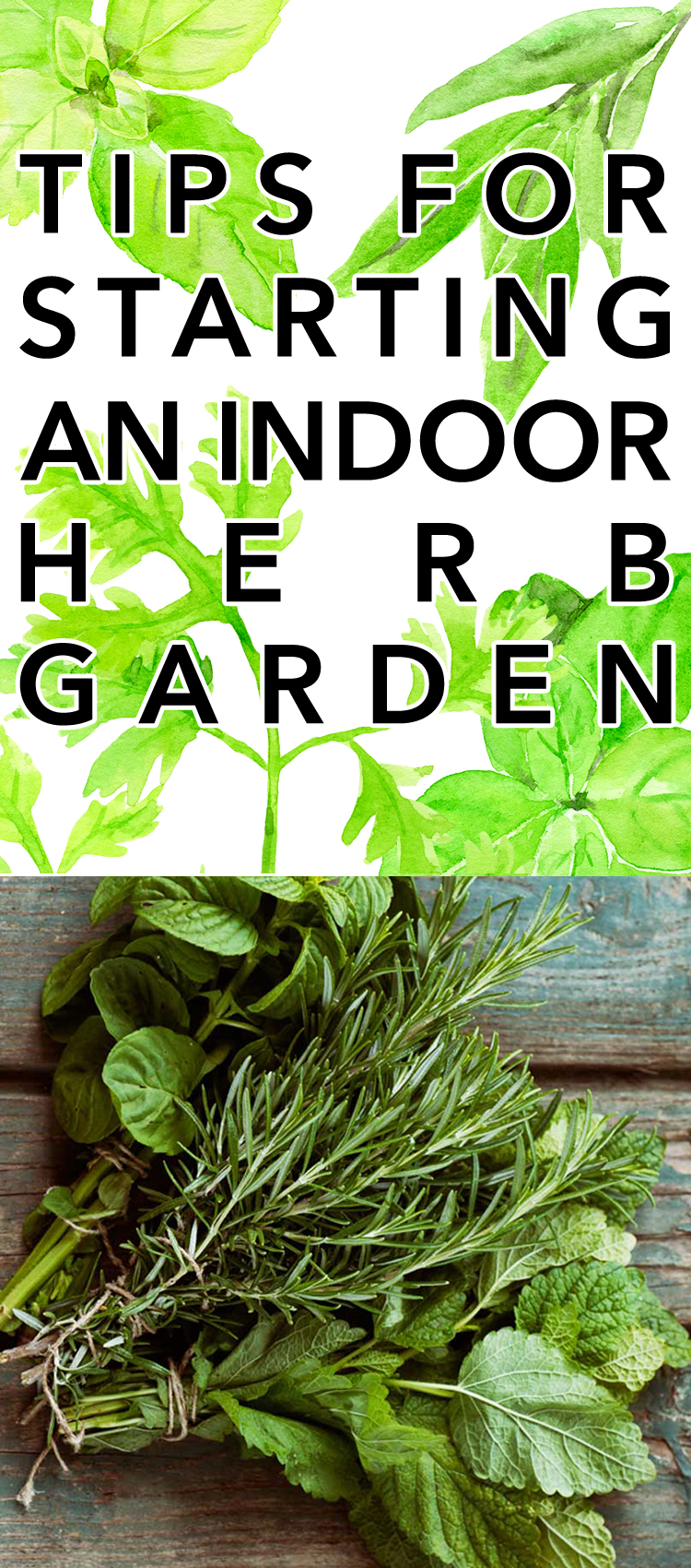 Tips For Starting An Indoor Herb Garden The Cottage Market