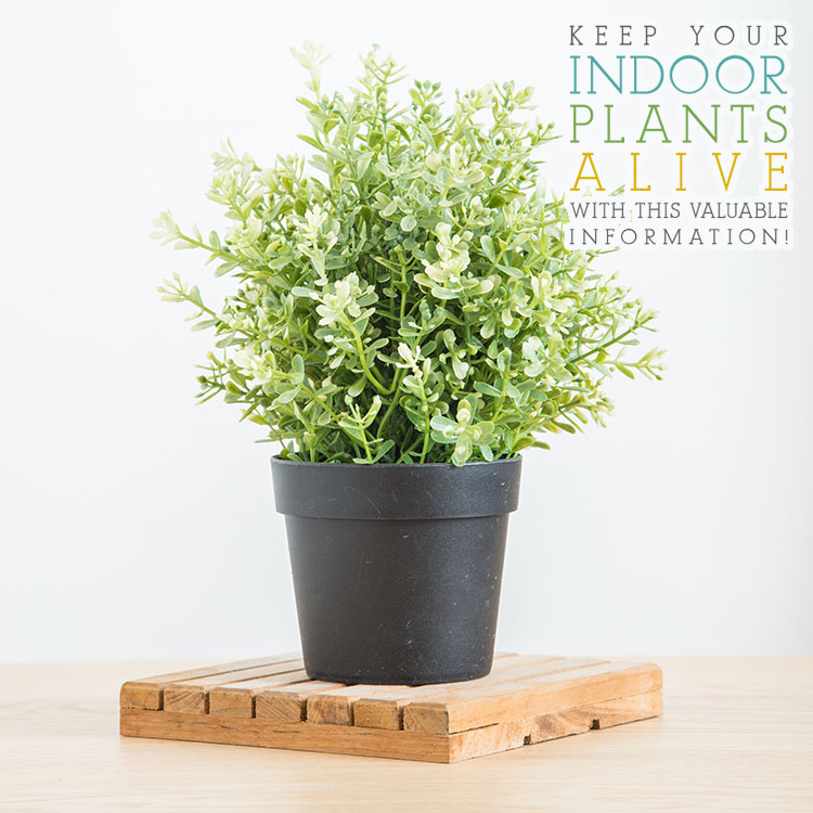 Keep Your Indoor Plants Alive With This Valuable