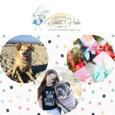 Down the Rabbit Hole / Favorite Links / Pet Charity / Giveaway