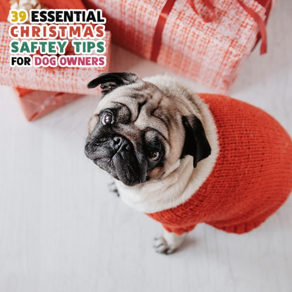 39 Essential Christmas Safety Tips for Dog Owners
