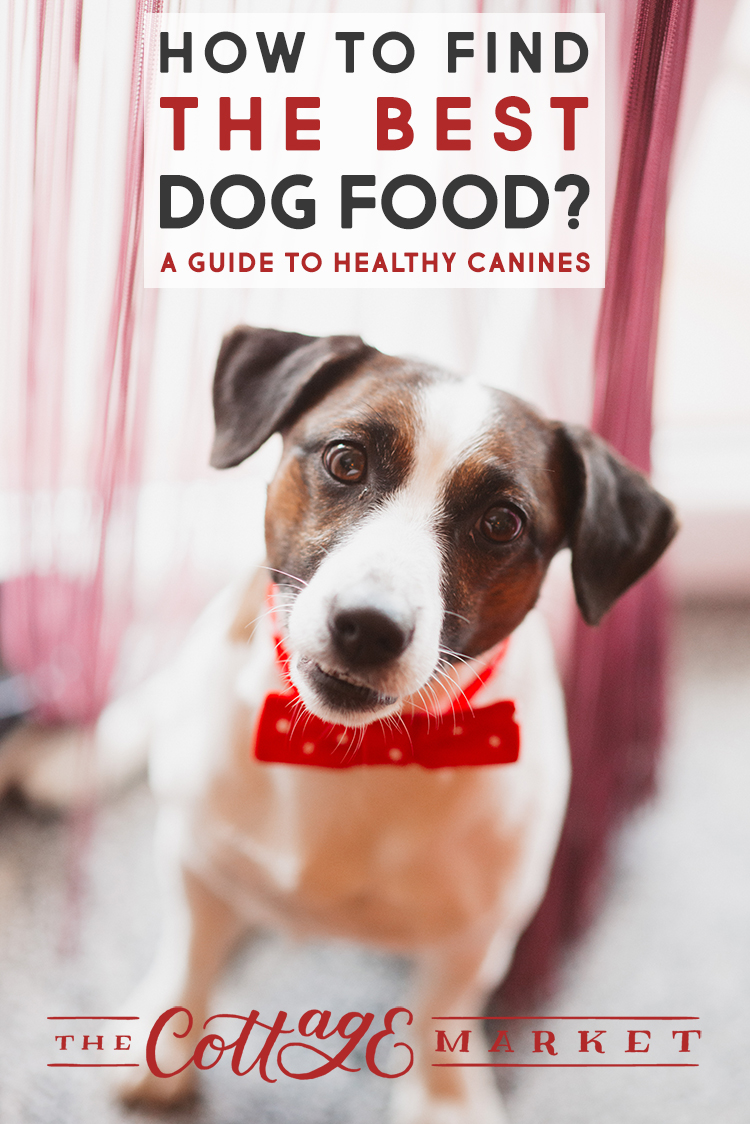 How To Find The Best Dog Food – A Guide To Healthy Canines