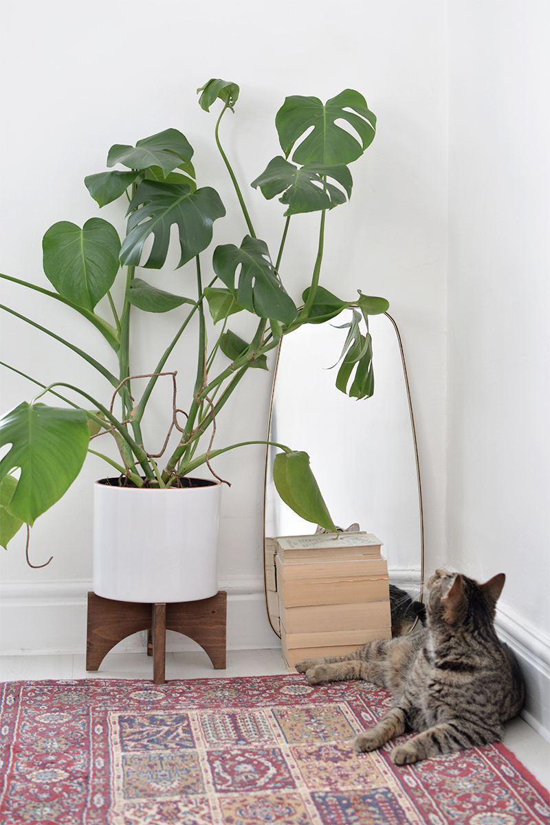 This wooden planter stand is multi-purpose and looks great in any room -- even your furry friends will love it