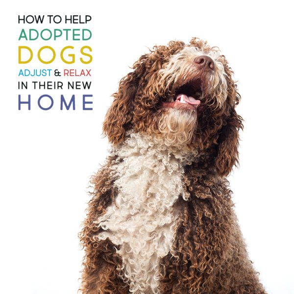 How to Help Adopted Dogs Adjust and Relax in Their New Home