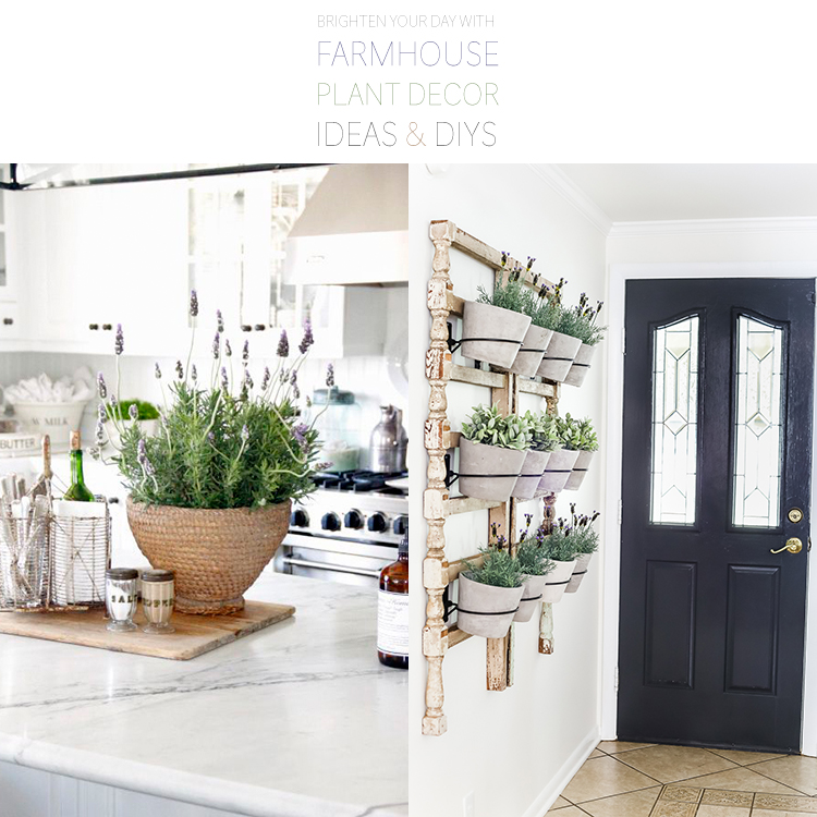 http://thecottagemarket.com/wp-content/uploads/2018/04/FarmhousePlants-T-2.jpg