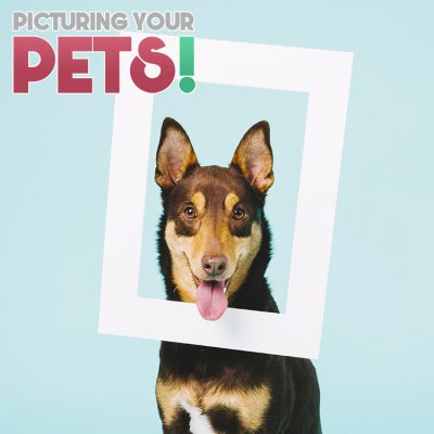 Picturing Your Pets