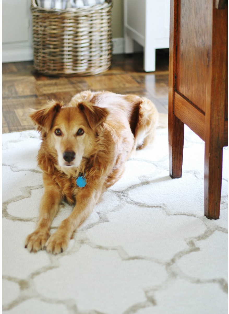 This adorable pup is relaxing on the cozy geometric rug.